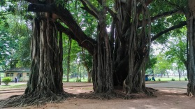 Cinnamon Garden - Colombo (6)_edited
